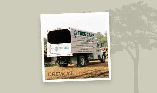 Tree Care Crew 3 - Stay Tuned