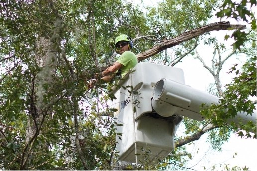 tree worker in bucket removing branch from tree