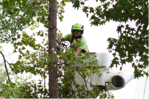 tree worker in bucket truck trimming limbs