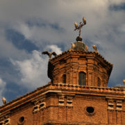 Cigognes sur la cathédrale de Tudela