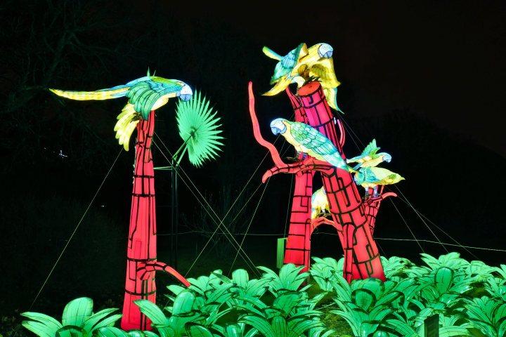 Illumination-JardinDesPlantes-0020