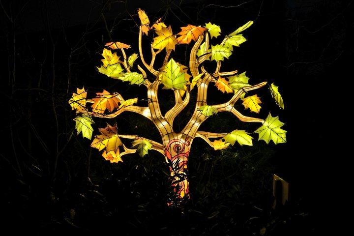 Illumination-JardinDesPlantes-0044