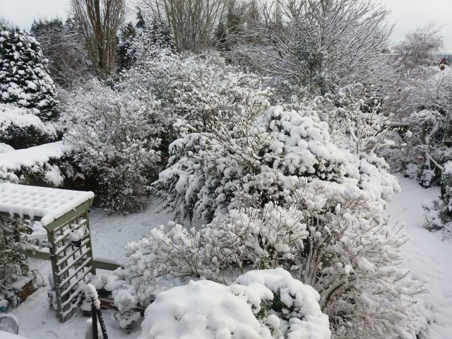 Snowy garden pic by Millicent Stephenson Saxophonist