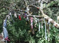 Cloutie Tree