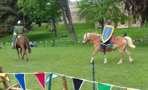 A Viking type pony was included in the three on show