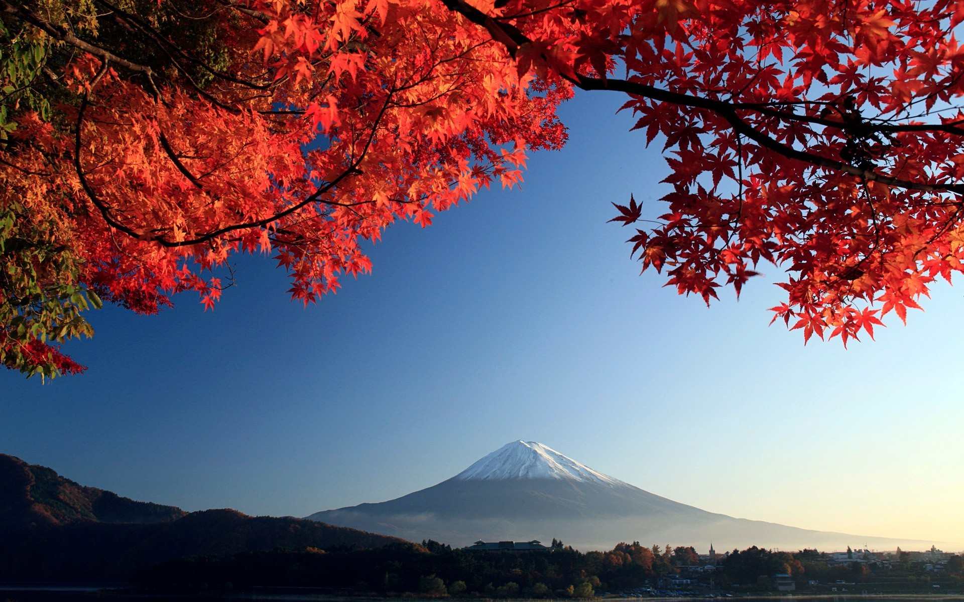 Fall Leaves Ponds Computer Wallpaper Red Maple Leaves And Mount Fuji On The Horizon Phone