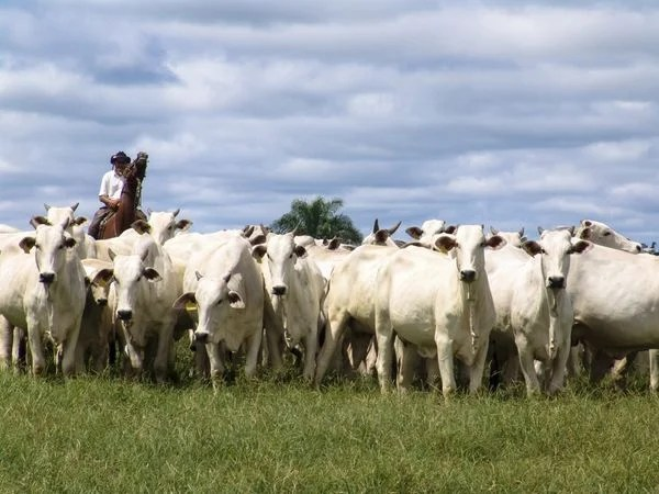 News You Can Use – Save Money Eating Cows, Citi Follows the Herd, Free Wi-Fi Passes, & Save at HP!