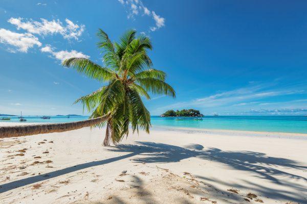 Palm over beach in tropical island