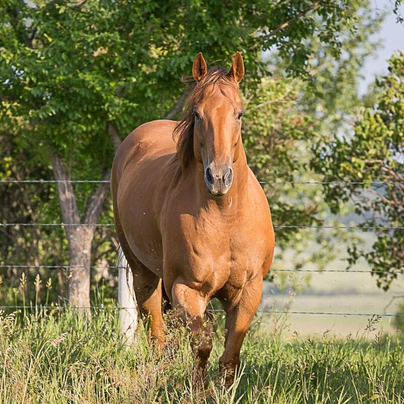 Mill Iron Quarter Horse Sales