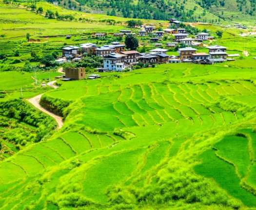 Beautiful view of rice fields and farm traditional houses, Bhutan