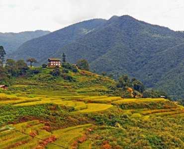 Bhutan rice terraces