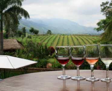 Wine Tasting in Burma