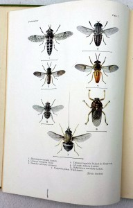 insects5