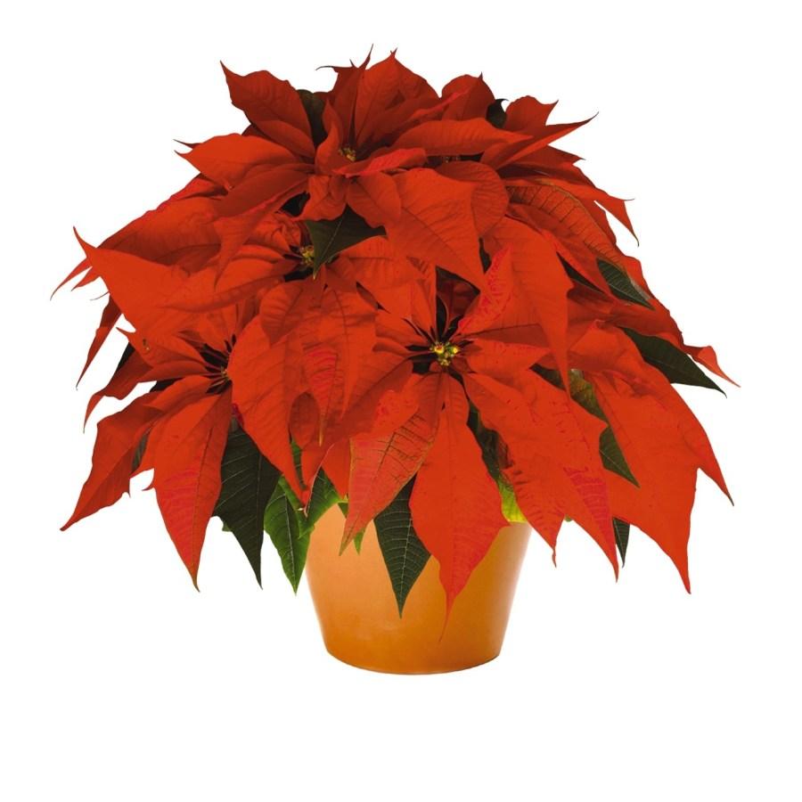 Orange Spice Image