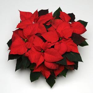 Christmas Tradition Image