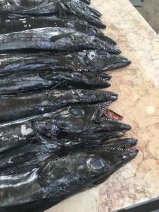 The evil looking Espada fish