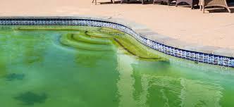 Algas e Bactérias: O Terror das Piscinas