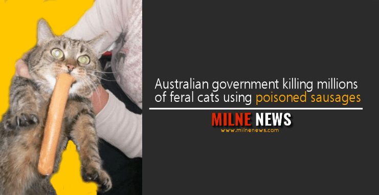 Australian government killing millions of feral cats using poisoned sausages