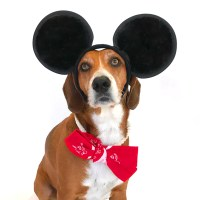 Dog Halloween Costumes You Can Easily Make At Home
