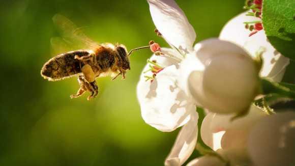 priča o pčeli i muvi