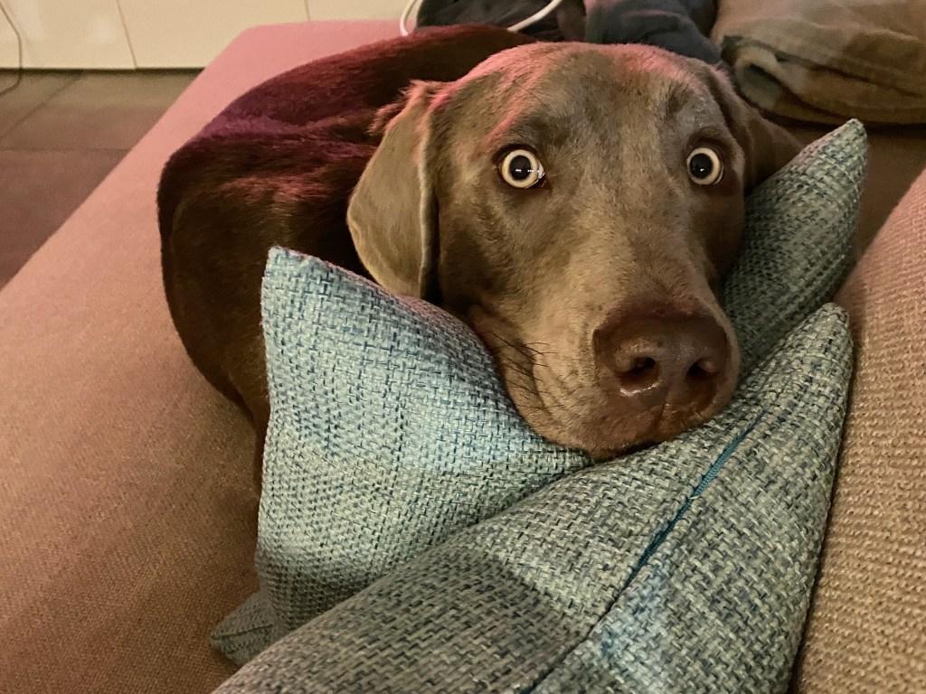 Highlight der Woche_Onlinekurs_Mein Hund kann Ruhe