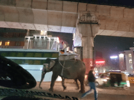 Inexplicably, an elephant. Strolling along a very busy street in Jaipur.