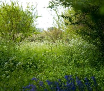 Flowery scene by Sheila Mackie