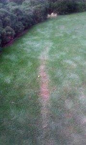 Co je příčinou uschlé trávy?