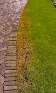 Čistění dlažby Roundupem a druhotný efekt na trávníku.