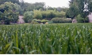 travnik-zahrada-400m2