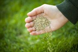 Špatné skladování osiva má vliv na klíčivost semen.