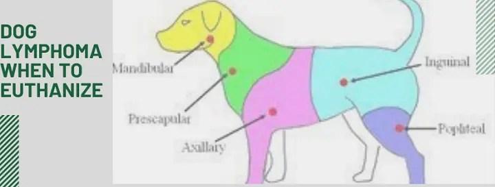 Dog Lymphoma When To Euthanize – MiluMimi.com – A Useful ...