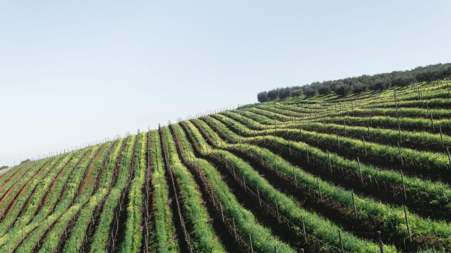 Portugali viinamarjaistandus-MilVinhos