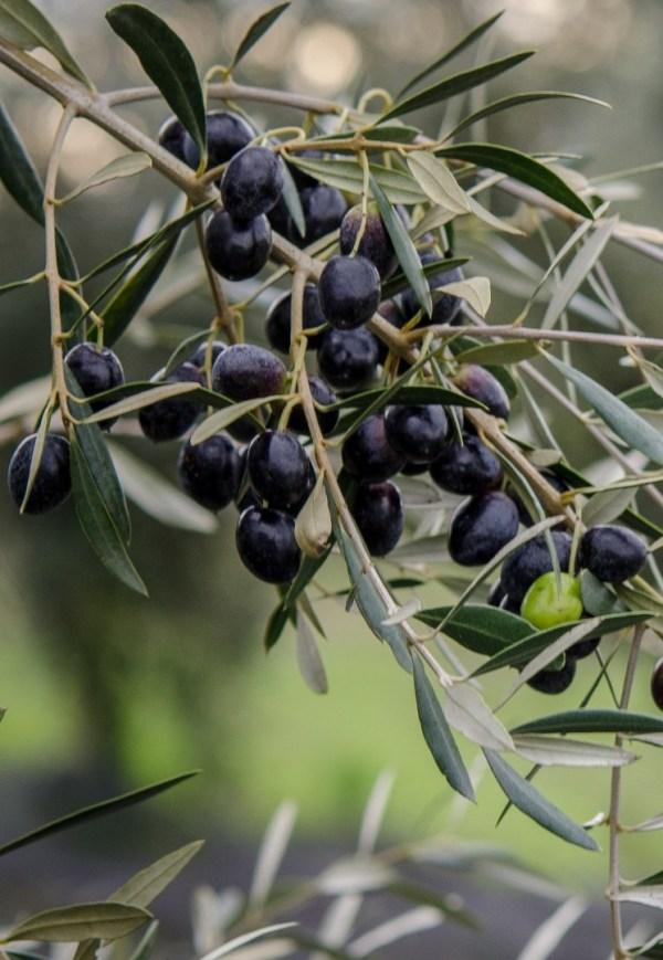hea oliiviõli