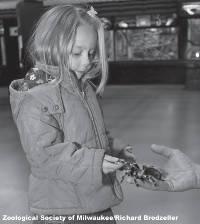 girl-holding-tarantula-spider-zoological-society-of-milwaukee