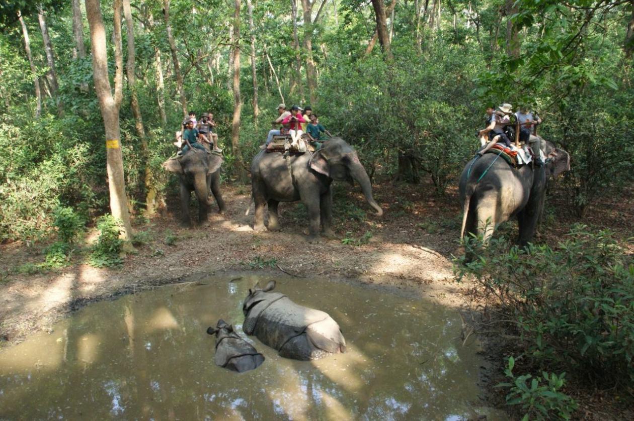 Turismo elefantes