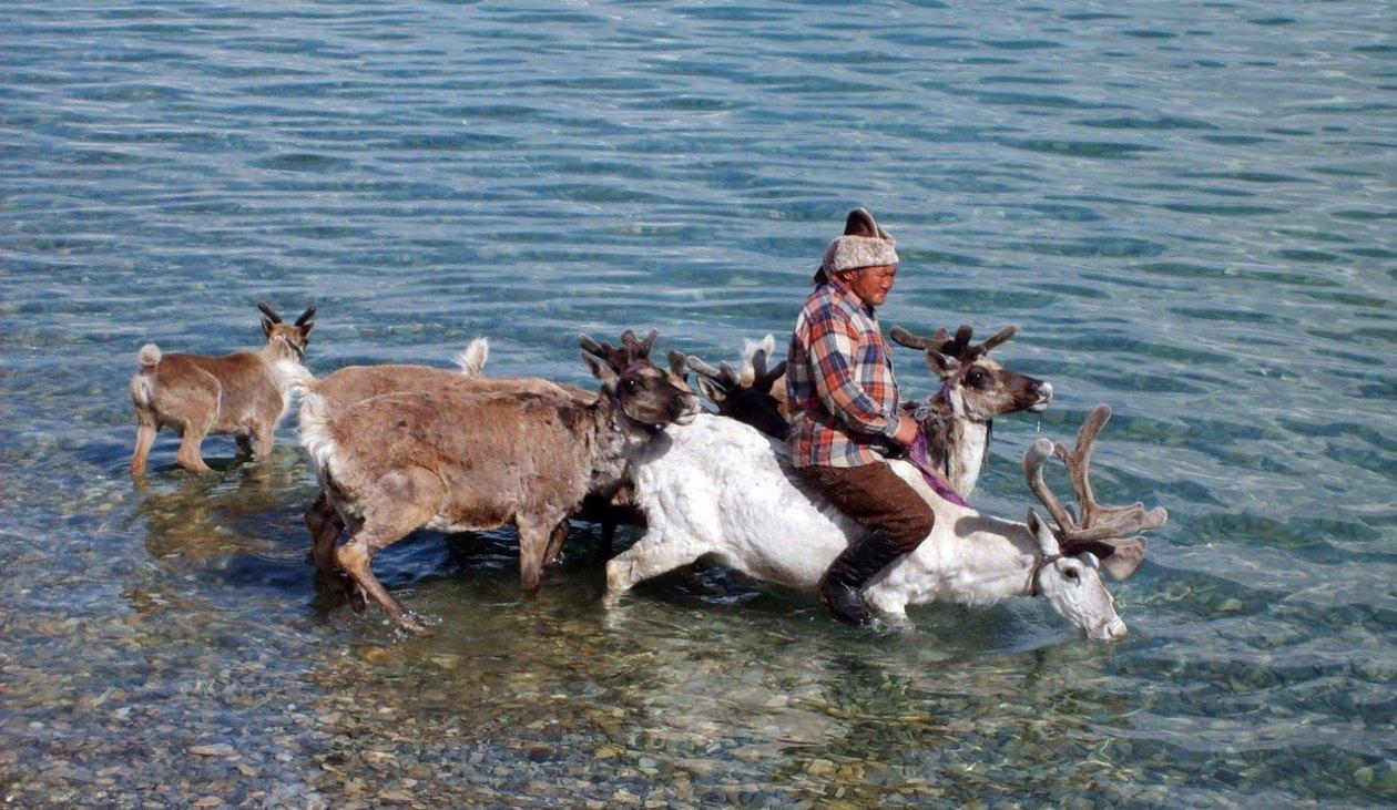 Tsaatan Mongolia