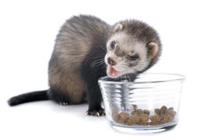 cuidados hurones alimentacion