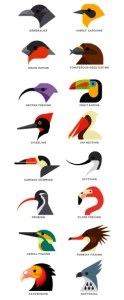 clasificacion aves