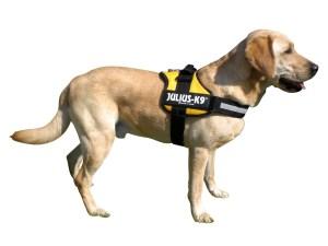 cuidados perros arnes