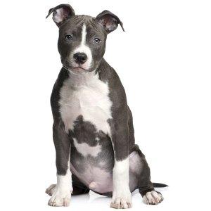 Cuidados perros guia