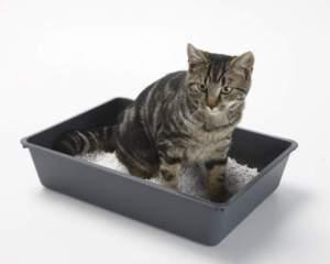 Cuidados gatos bandeja deposiciones