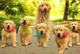 cuidados perros salir a la calle