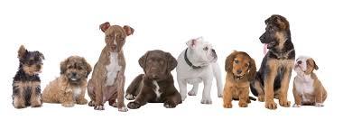 cuidados-perros