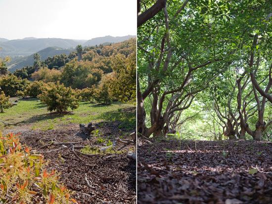 avocado ranch views