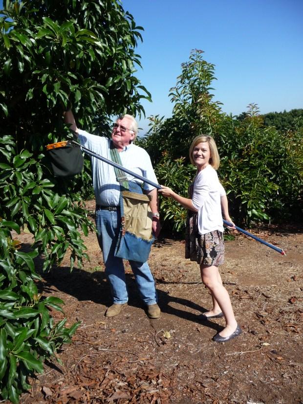 Gigi picking avocados