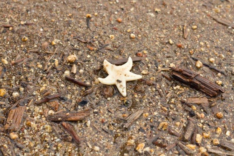 star fish found in an avocado grove