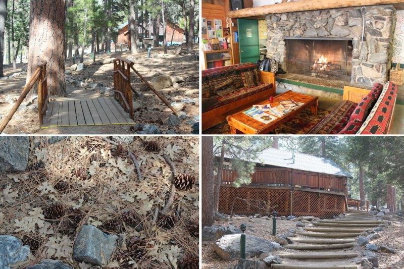 Camp de Bennevile Pines
