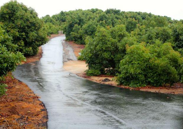 grove-road