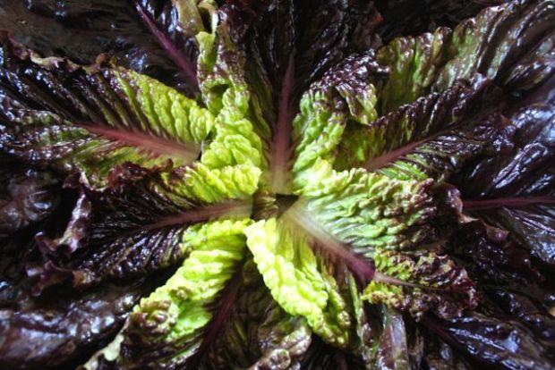 lettuce-leaves-2